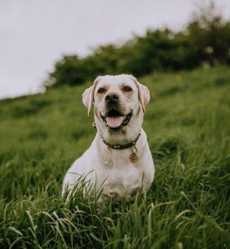 Comparativa mejores dispensadores de alimentos para perros y gatos