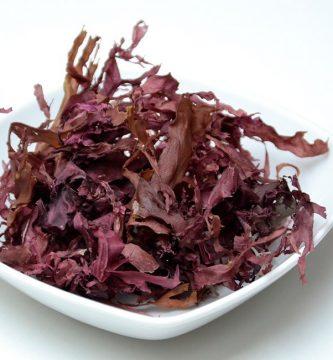 Valores nutricionales del alga dulse