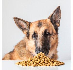 Veggieanimals pienso vegano para perros