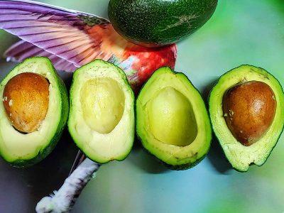 Receta guacamole como se hace con cilantro