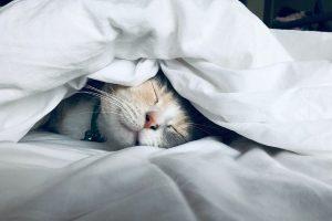 Dieta vegana dormir mejor evitar el insomnio