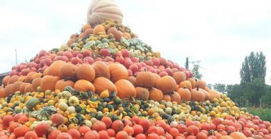Pirámide nutricional vegana
