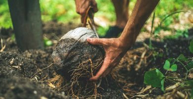 Comprar productos ecológicos online